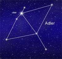 Sternbild Adler