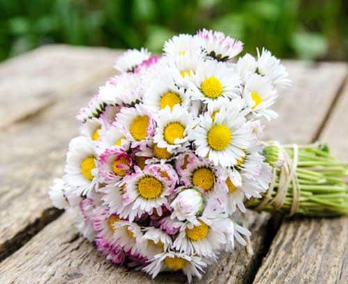 Blumen zum Namenstag